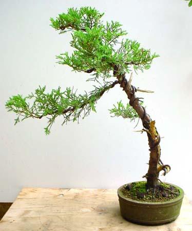 youprn gratis bonsai